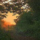 Hazy Summer Morning Path by Kelly Chiara