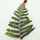 Christmas Fern Tree by Jennifer J Watson
