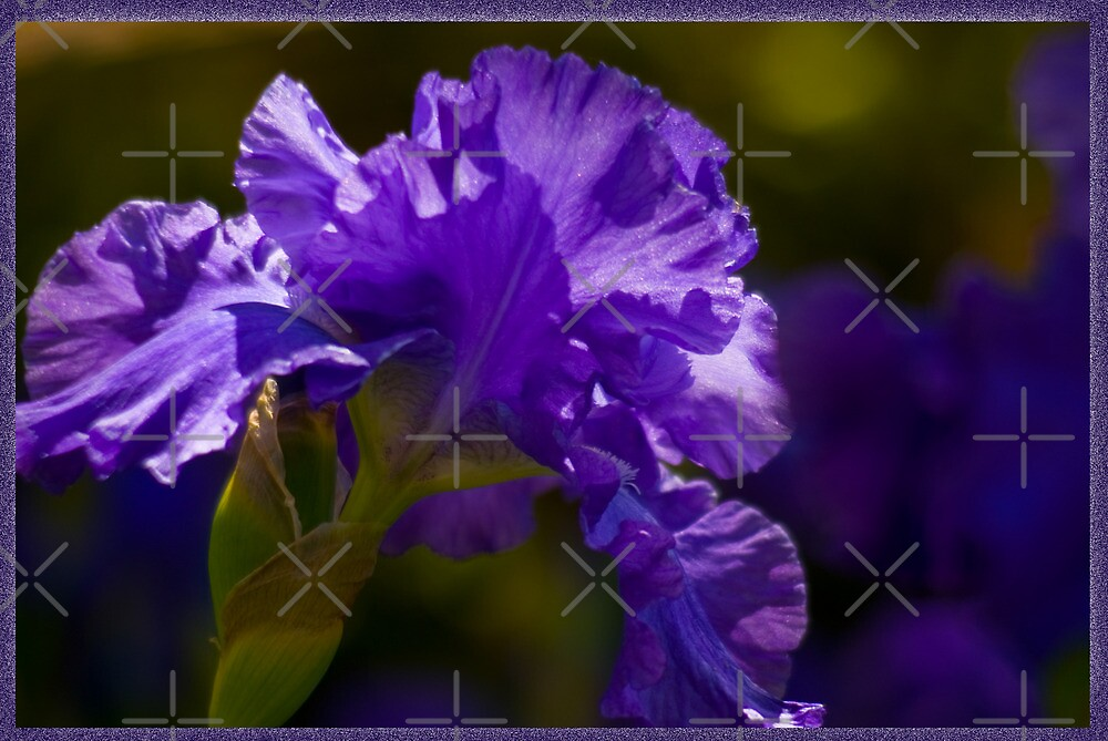 Purple Gladioli by Deborah McGrath