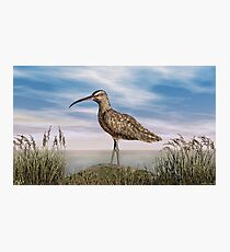 Whimbrel Photographic Print