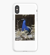 Beautiful Blue Peackock iPhone Case/Skin