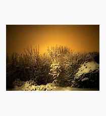 Snowy Photographic Print