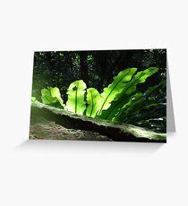 Fern green, Lamington National Park, QLD Greeting Card