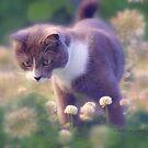 SULLY the INQUISITIVE © Vicki Ferrari Photography by Vicki Ferrari