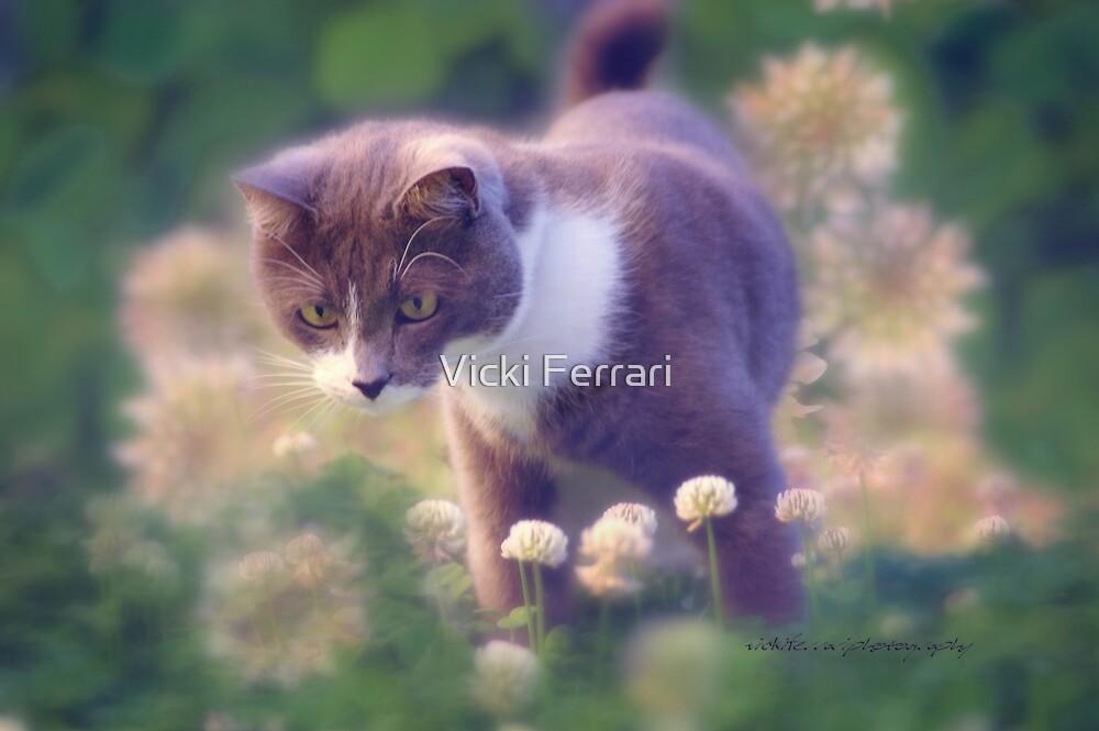 SULLY the INQUISITIVE (card) © Vicki Ferrari Photography by Vicki Ferrari