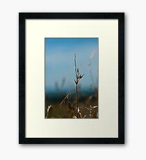 Grasses... Framed Print
