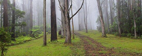 Amidst Mountain Ash by Donovan Wilson