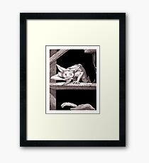 Rogue in the Rafters Framed Print