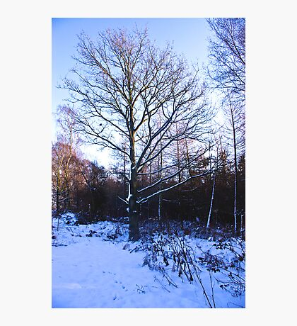Snow in the Woods Photographic Print