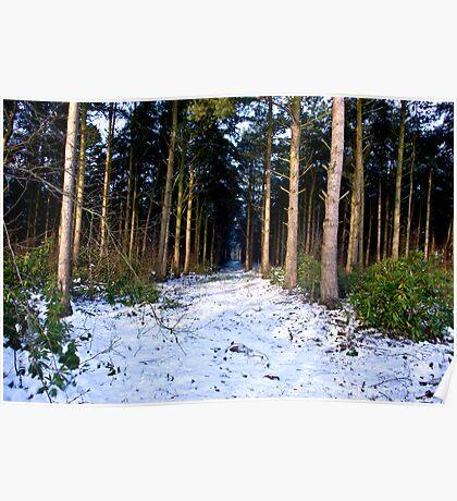Snow Path Poster