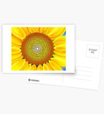 Beautiful sunflower of summer Postcards