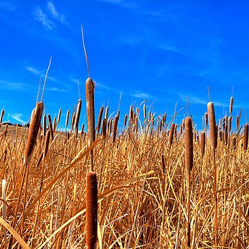 Hot Dog Reeds by boblarsonphoto