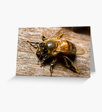 Bee Fly Greeting Card