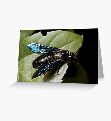 Blue Winged Wasp Greeting Card