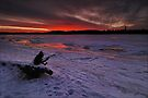 About Frozen Log by Anton Gorlin