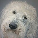 Labradoodle - commission 3 by Carole Russell