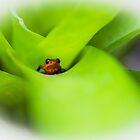 Costa Rica' s Dart Frog by Richard Shakenovsky