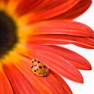 Ladybird - So shy! by Sarah-Jane Covey