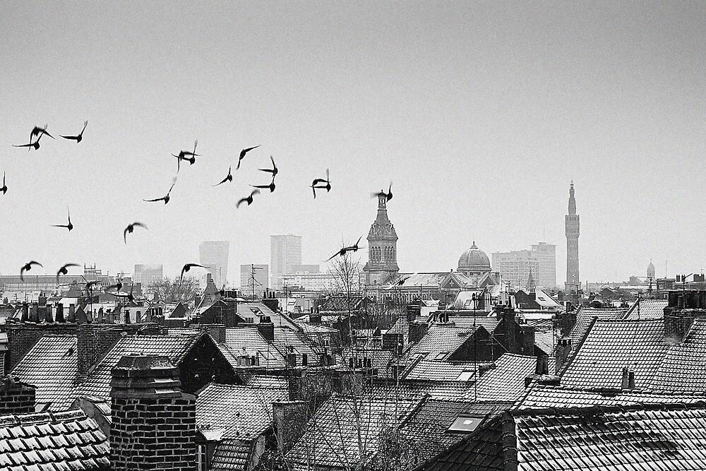 Black Birds  by Nayko