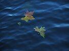 Adrift by Themis