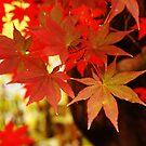 Dependably Red by ElyseFradkin