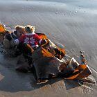 Seaweed Sleigh for Teds...........Lyme Regis by lynn carter