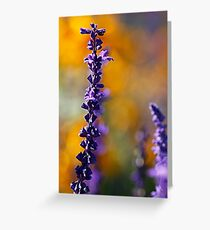 orange and purple  Greeting Card
