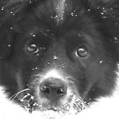 Dottie's First Snow by Tibby Steedly