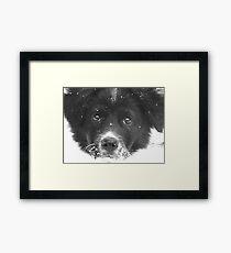 Dottie's First Snow Framed Print