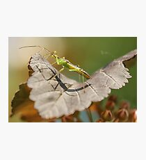 Green Insect Photographic Print