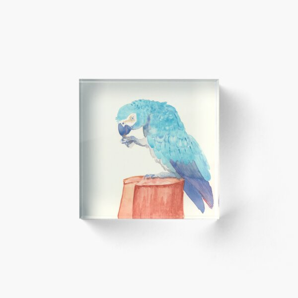 Blue Parrot  Acrylic Block