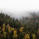 Autumn Love by Tordis Kayma