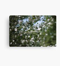Shimmering Poplar Canvas Print