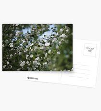 Shimmering Poplar Postcards