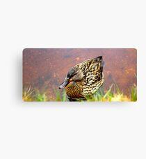 Portrait of a Duck Canvas Print