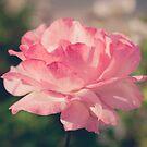 195 - That garden by CarlaSophia