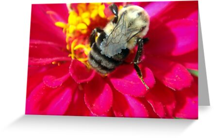 Zinnia and bee by Meredith Wickham