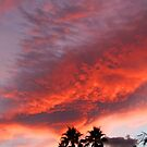 Palm Springs Sunset by Chet  King