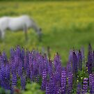 I Dreamed a Horse Among Lupine by Wayne King