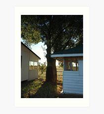 Bottle tree, Tomoo Station, QLD Art Print