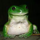 Green Tree Frog - (Litoria caerulea) by Normf