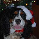 Christmas Cavalier! by Maddie