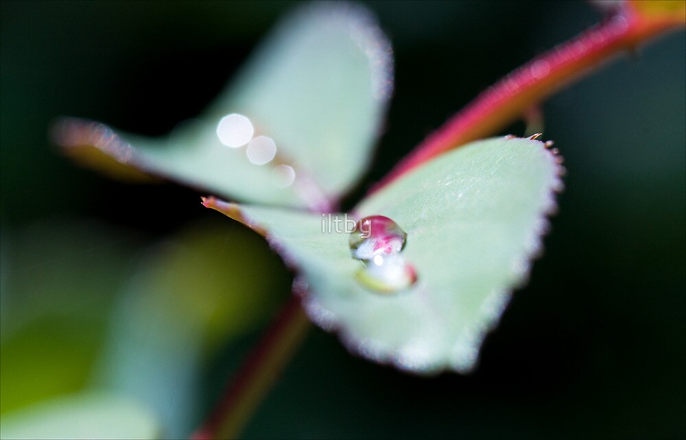 Gentle Hues by iltby