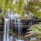 Falls behind the Ferns by Clare Colins