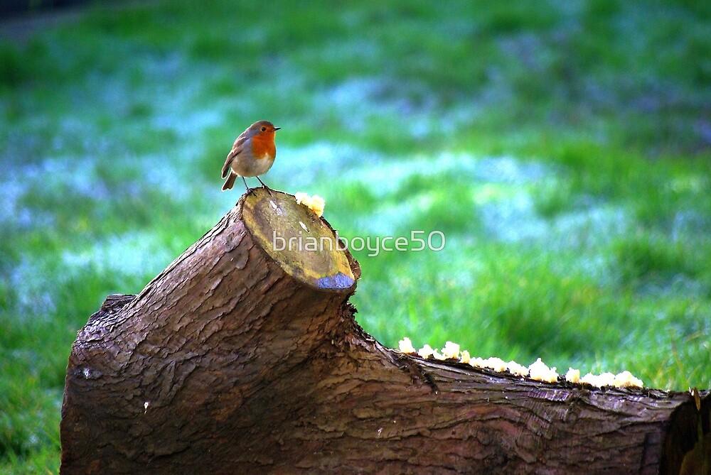 Robin Redbrest by brianboyce50