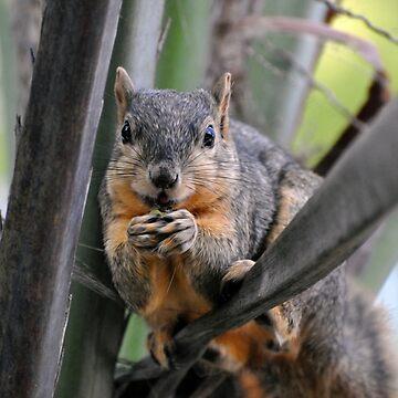 Squirrel  by venny