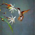 star bird by ezdrifter