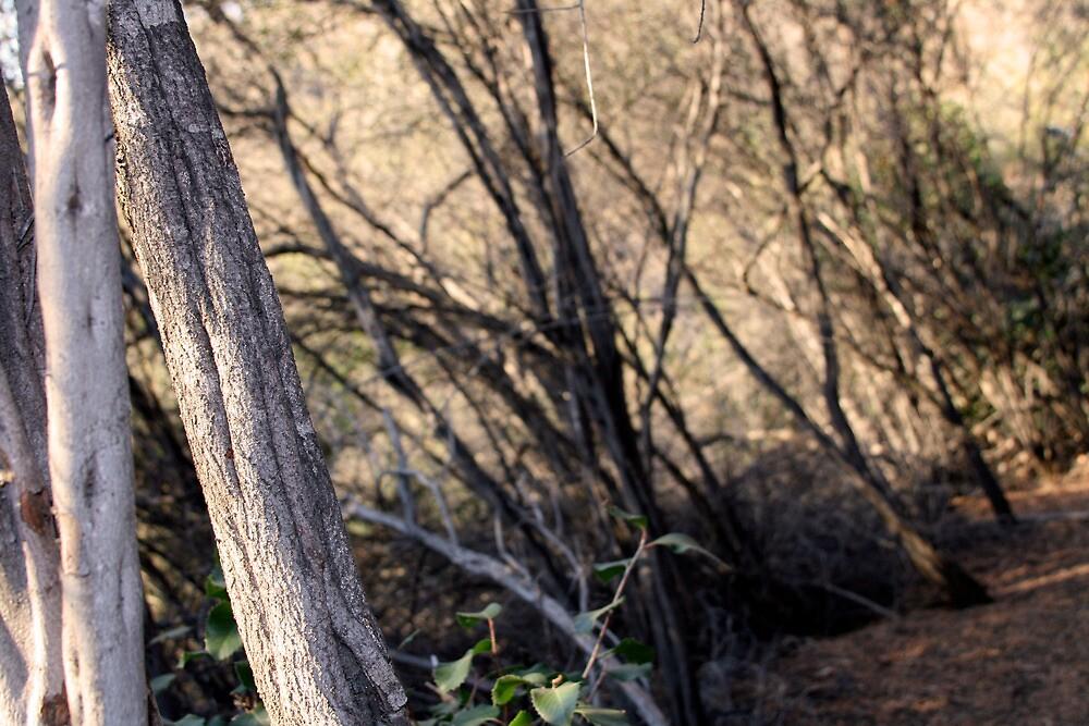 Santa Monica Mountains, Backbone Trail by Michael Berns