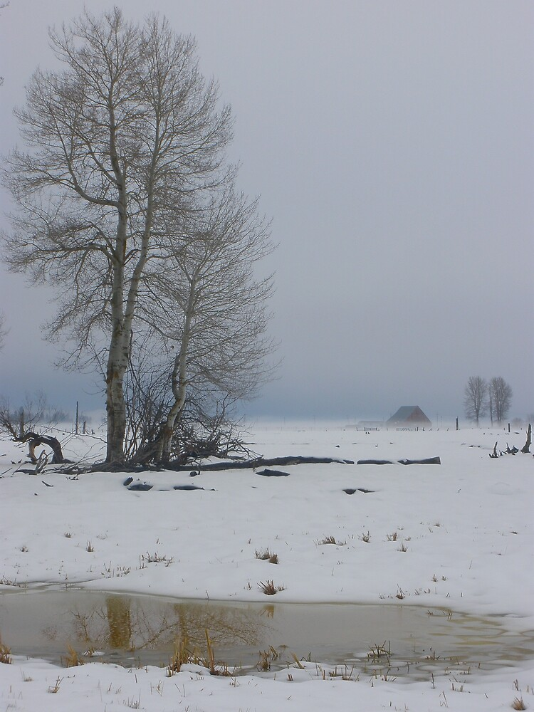 Winter Solstice by Thundercatt99