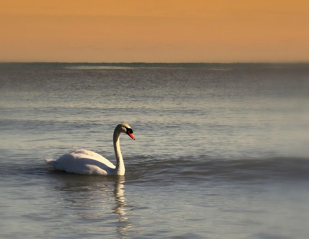 Lake Michigan Swan by ariesphoto